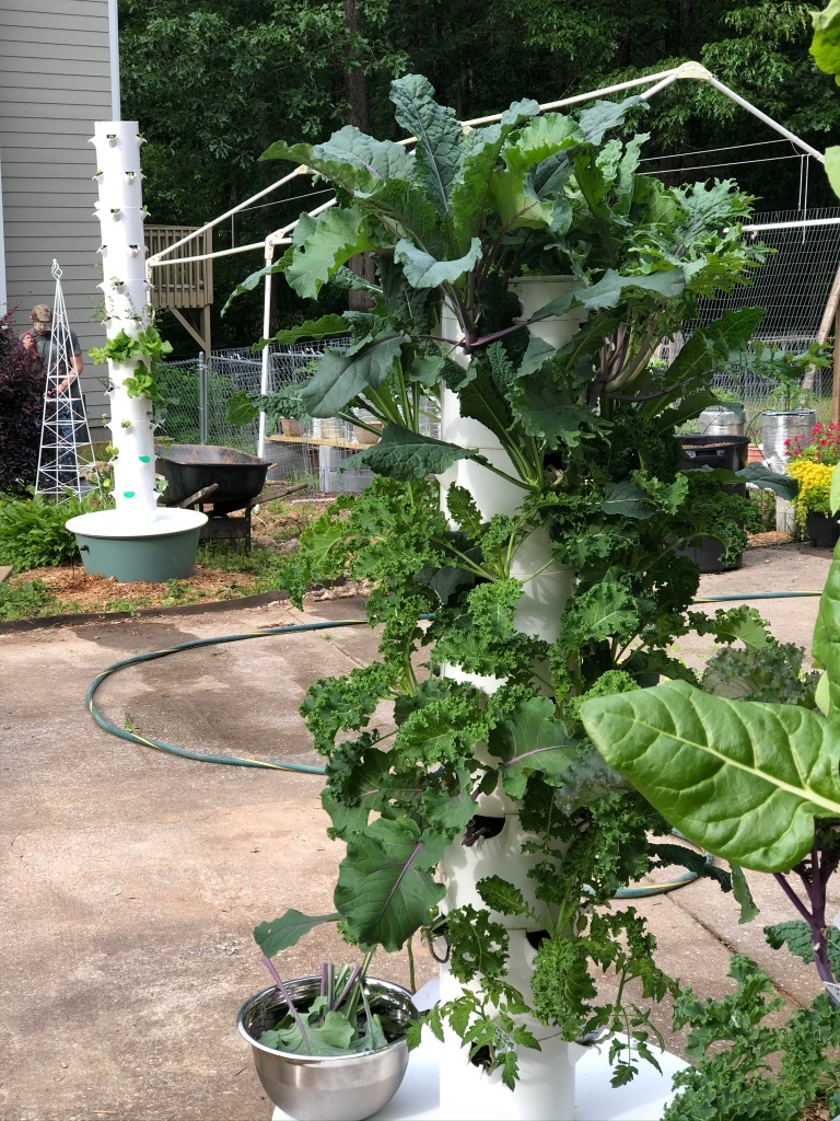 Kale growing on a hydroponic aeroponic vertical Tower Garden